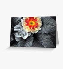 Fiery Primrose Greeting Card
