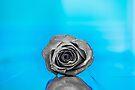 Frozen Heart by John Velocci