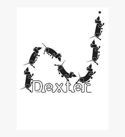 Dexter The Ball Boy Photographic Print
