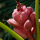 Exotic Pink by Niamh Harmon