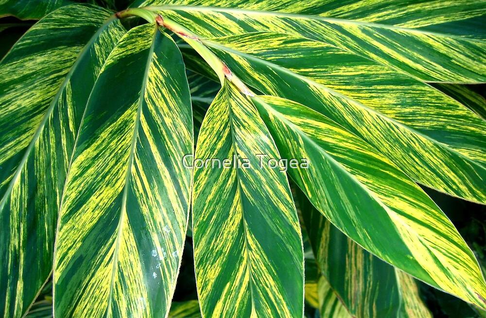leaves by Cornelia Togea