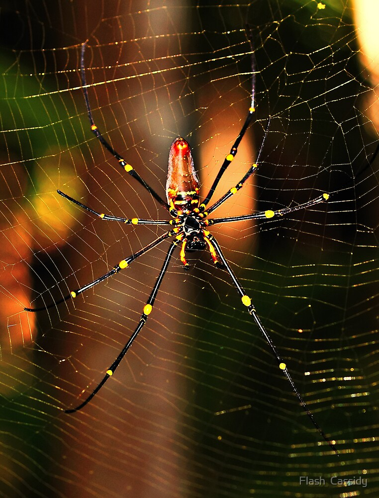 golden orb by Flash  Cassidy