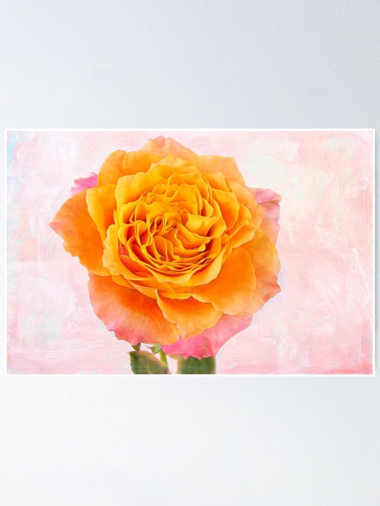 Free Spirit Rose Beauty Poster By Daphsam Redbubble