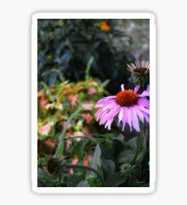 Purple Coneflower Sticker