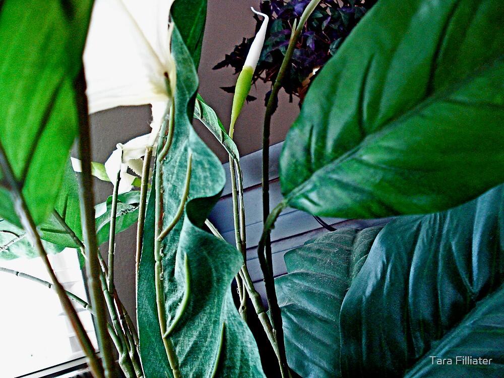Leaves by Tara Filliater