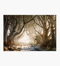 The Dark Hedges   County Antrim  Northern Ireland Photographic Print