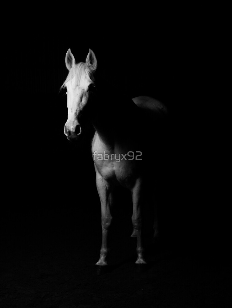 White Horse in the Dark by fabryx92