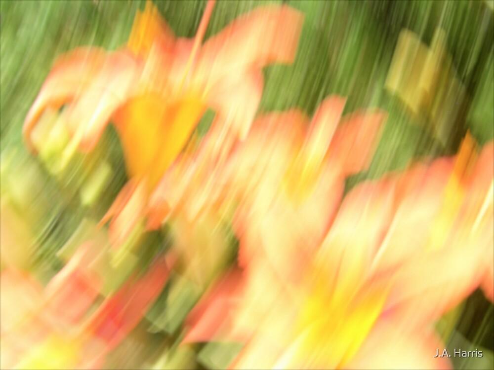 'Abricot Turbulence' by J.A. Harris