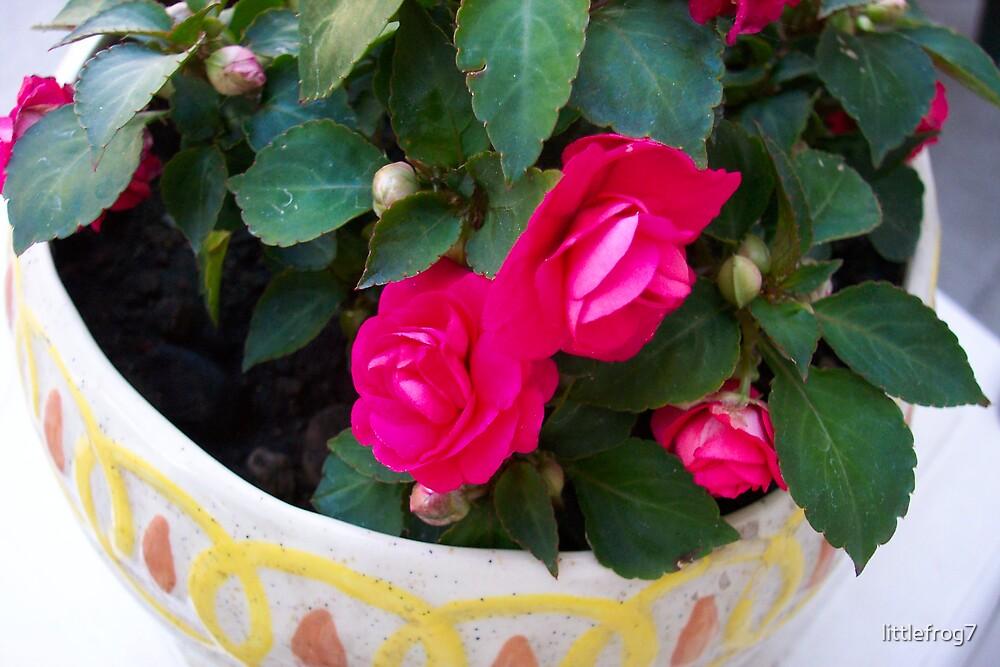 flower in pot by littlefrog7