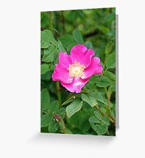 """A Wild Pink Rose"" Greeting Card"