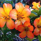 Rhododendron  by Magee