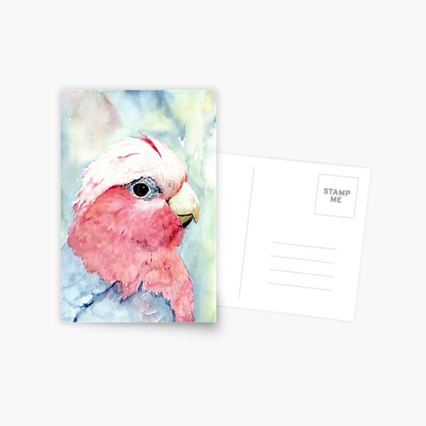 Australian Galah Cockatoo Watercolour Painting  Postcard