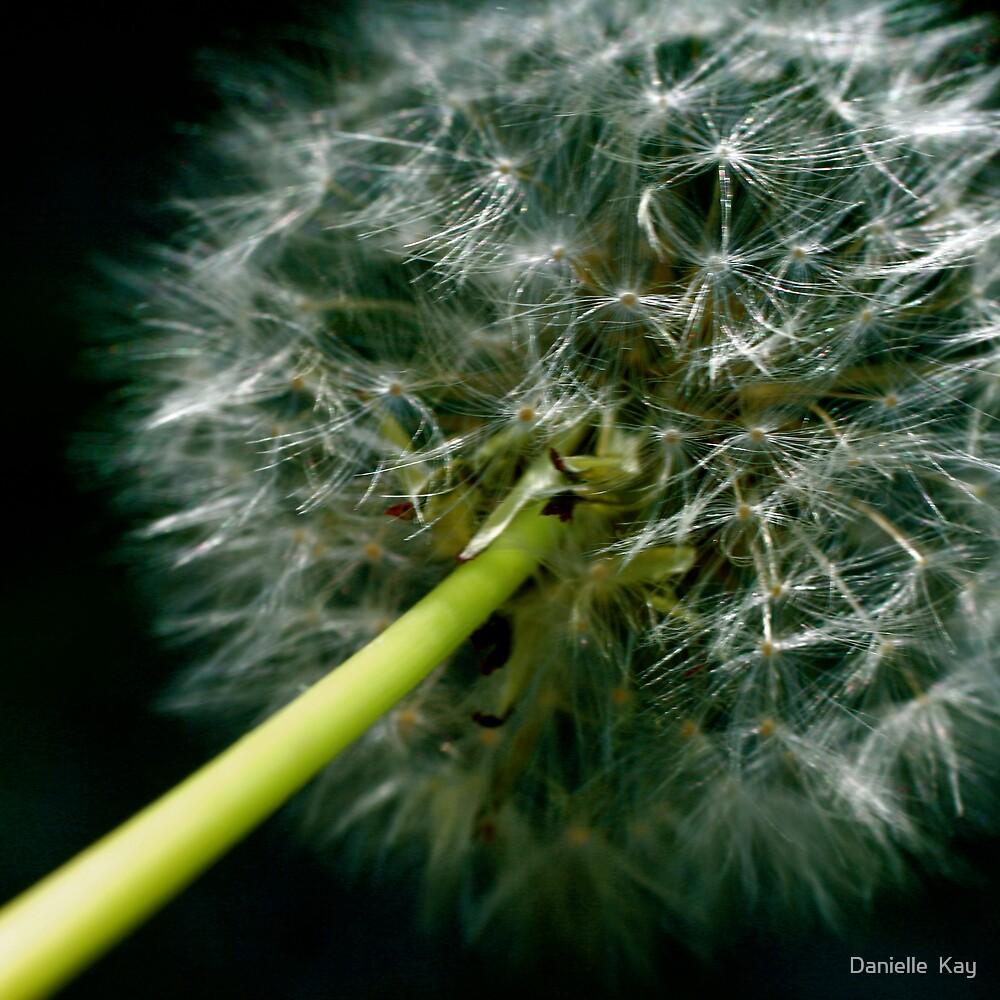 make a wish by Danielle  Kay