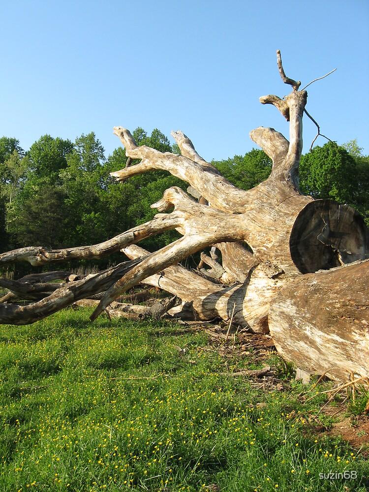 old oak tree by suzin68
