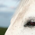 Into His Soul by Rubicon