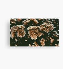 Dull Bloom Canvas Print