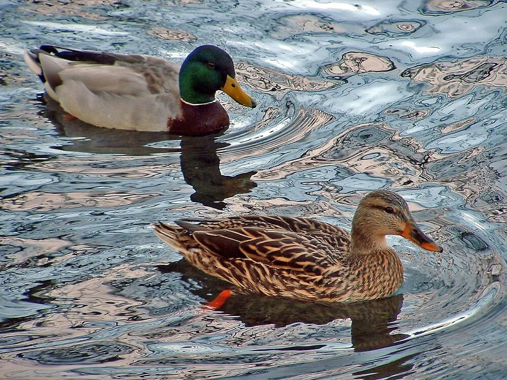 Mallards on Crystal Springs Pond by Patricia Shriver