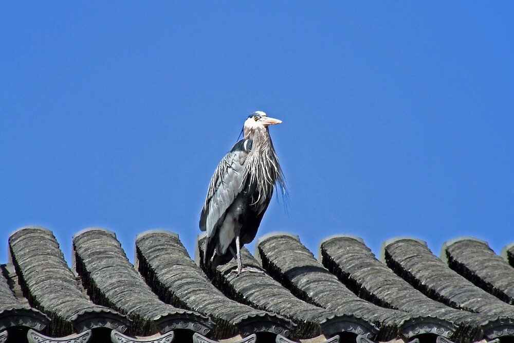 Lucky Heron at Classical Chinese Garden by Patricia Shriver