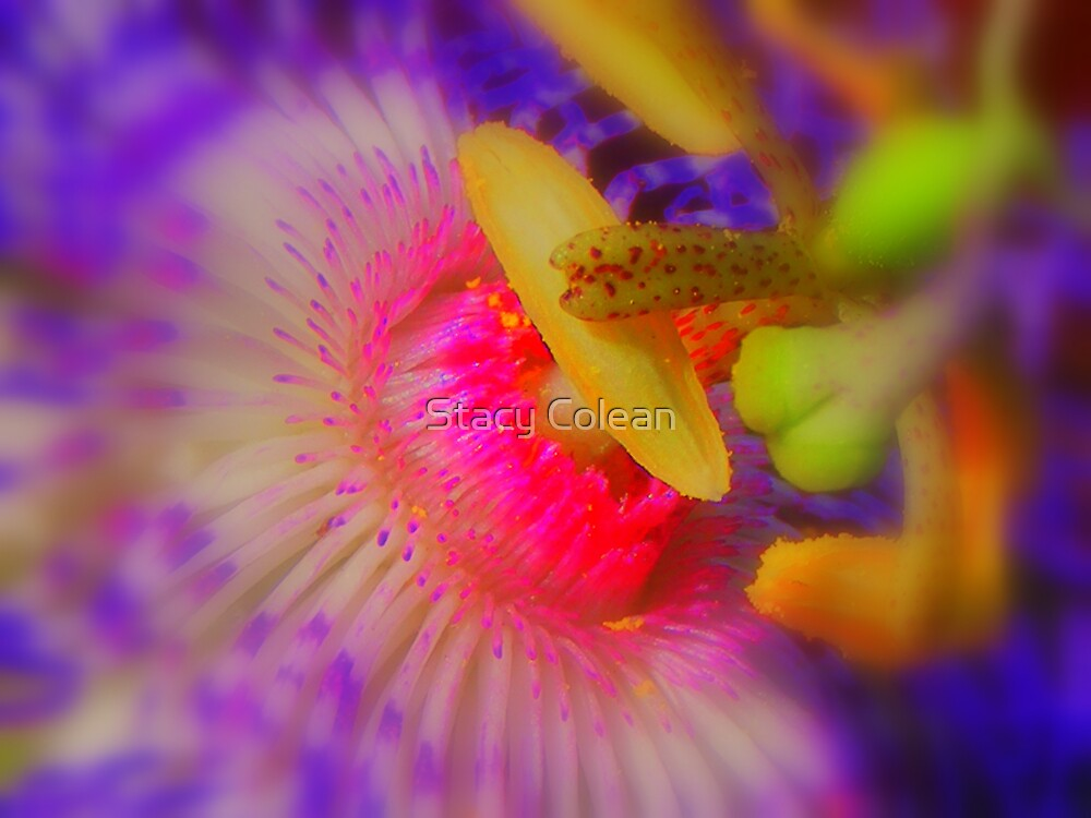 Power Colors by Stacy Colean