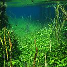 Ewens Ponds by tracyleephoto
