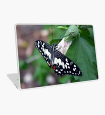 Beautiful butterfly with black and white wings on leaves  Laptop Skin
