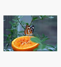 Colorful orange butterfly on slice of orange  Photographic Print
