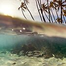 Hawaii Underwater Split View by Christopher Johnson