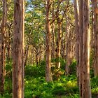 Forest Twilight, Boranup Forest by Dave Catley
