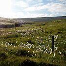 field of summer by NordicBlackbird