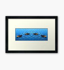 Tranquil Ducks Framed Print