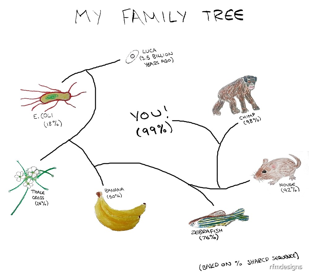 My Family Tree by rfmdesigns