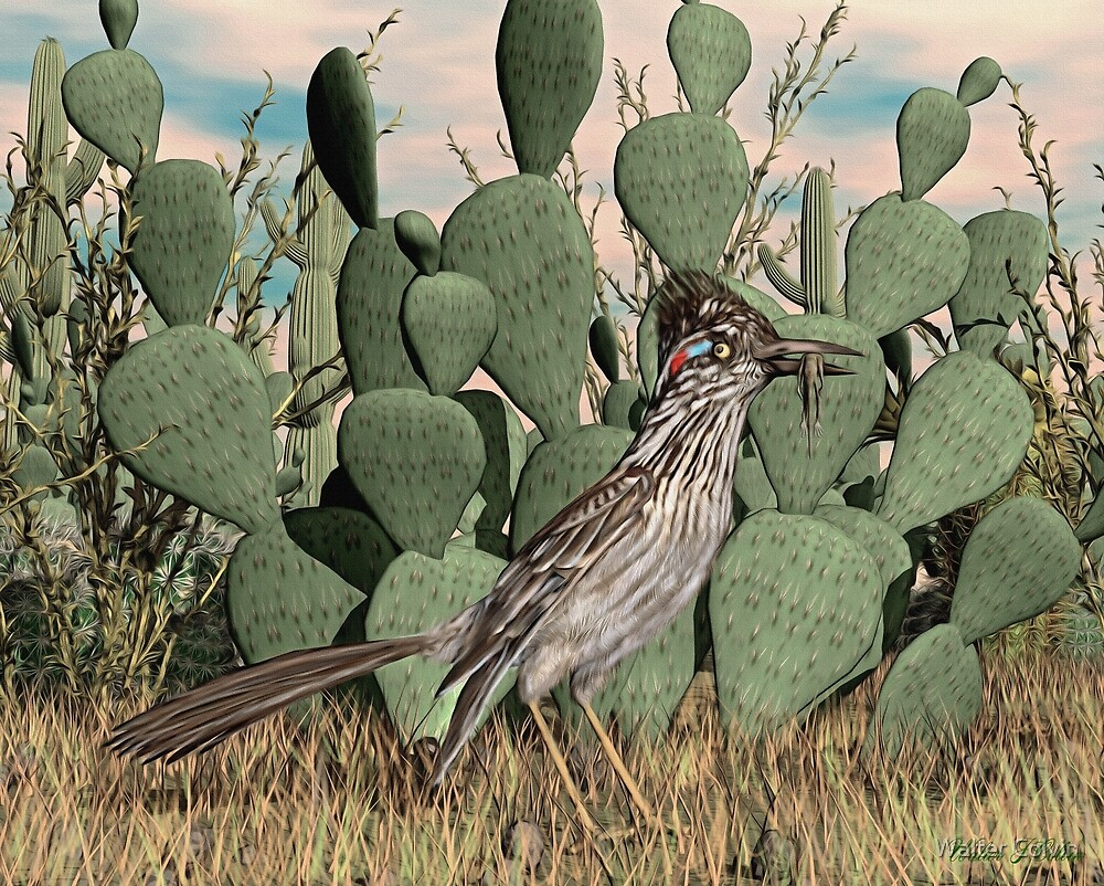 Sonoran Desert Greater Roadrunner by Walter Colvin