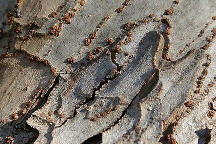 beautiful bark by picketty