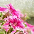 Dreaming Pink by Jonicool