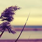 Blowin' in the Breeze  by Sarah Donoghue