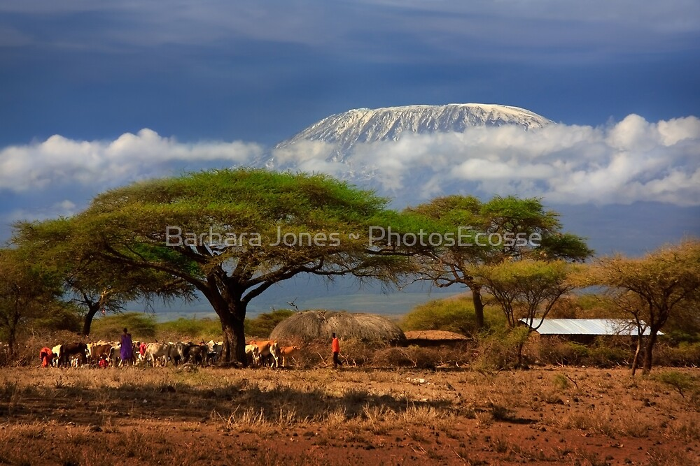 Kilimanjaro, and the Acacia Trees. Kenya, Africa. by Barbara  Jones ~ PhotosEcosse
