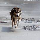 Beach Run by Anya  Cristina