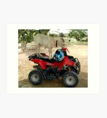 BILLY Wants To Ride A Quad! Art Print