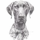 hunting dog drawing by Mike Theuer