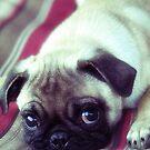 Pug Life by Yannik Hay