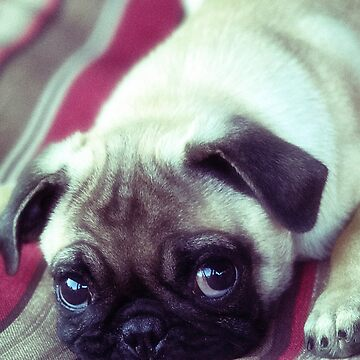 Pug Life by Photograph2u