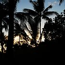 palms silhoutte by Deborah anne Nero