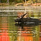Bull Moose Crossing Creek by Michael Cummings