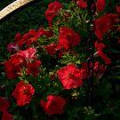 Flower Photographs by © Joe  Beasley IPA