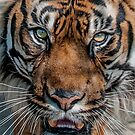 Tiger's Eyes by Brian Tarr