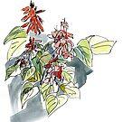 Salvia by Gabriele Maurus