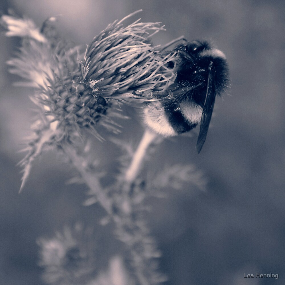 making love to a thistle  by Lea Henning
