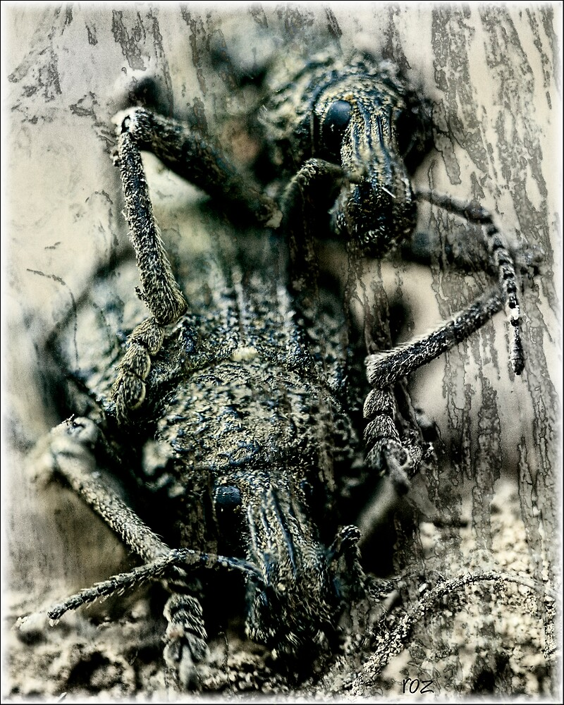wood beetles by rozdesign