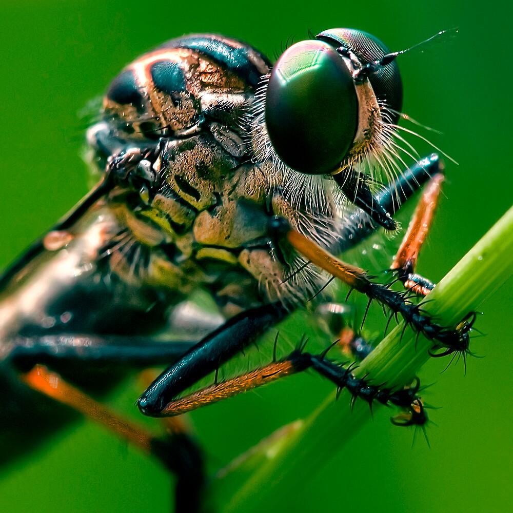 anatomy of a robberfly by rozdesign