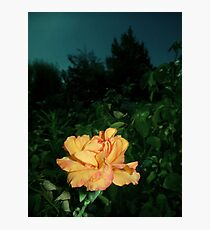 gold rose, night sky 08/20/17 Photographic Print